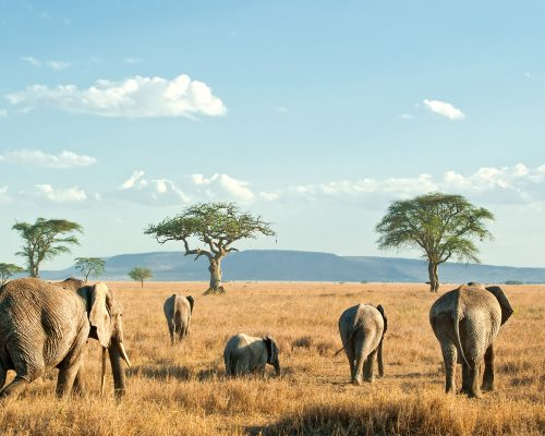 Tanzania_0001_Tanzania-Serengeti National Park-shutterstock_82512277